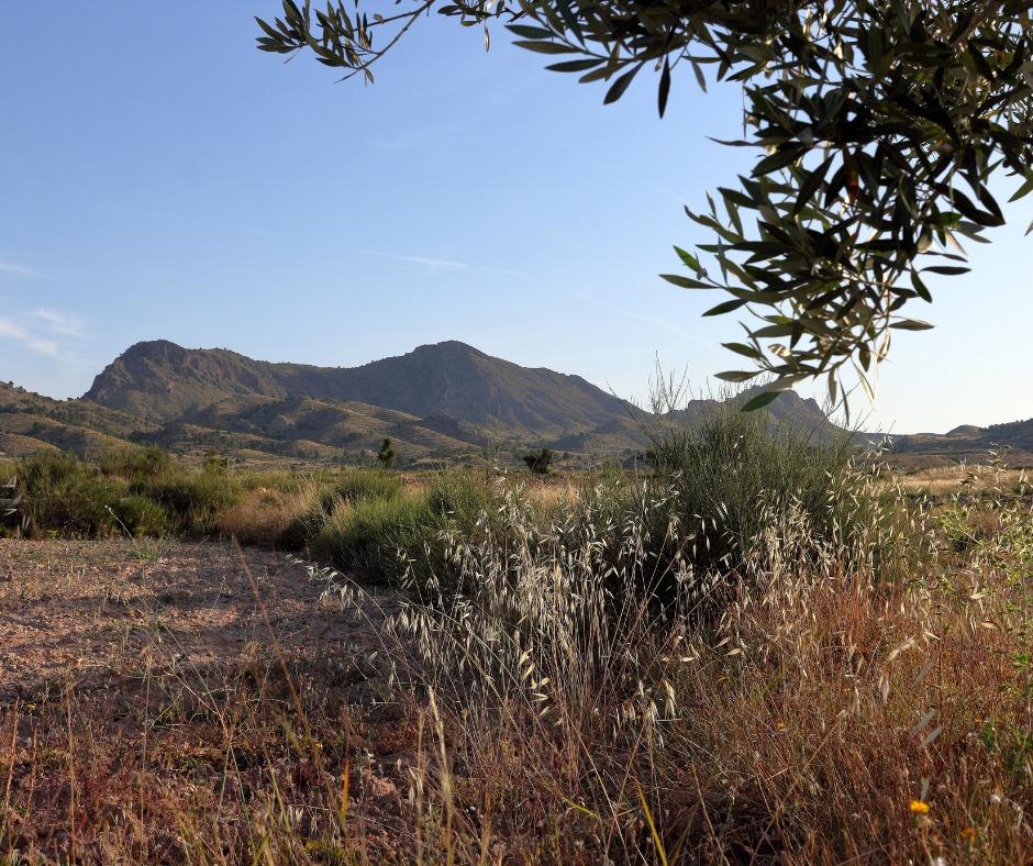 Paisaje rural Elda Alicante